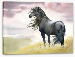 Black horse in the breeze