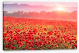 Poppy morning mist Stretched Canvas 60150152