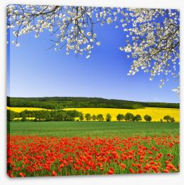 Canola and poppies Stretched Canvas 60238982