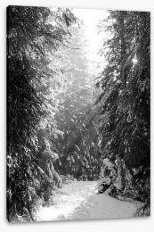 Between the fir trees