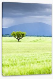 The lonesome tree Stretched Canvas 61844992