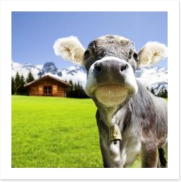 The dairy milk cow Art Print 67376520