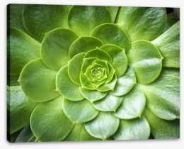 Tropical succulent Stretched Canvas 71888846