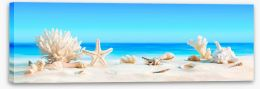 Shells on the beach panorama Stretched Canvas 84676783