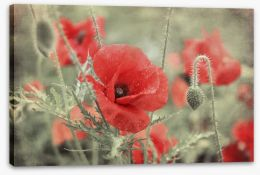 Vintage poppy Stretched Canvas 84934837