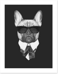 Suave french bulldog