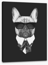 Suave french bulldog Stretched Canvas 91591773