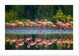 Flamingo run