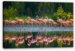 Flamingo run Stretched Canvas 92614881