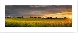Canola sunset panorama