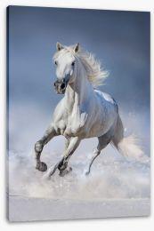 Snowdrift mare