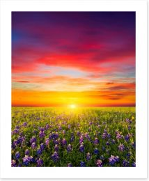 Wildflower meadow sunset