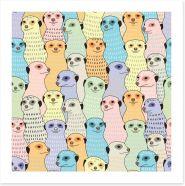 Meerkat meeting