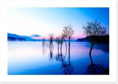 Trees in the water Art Print 113714528