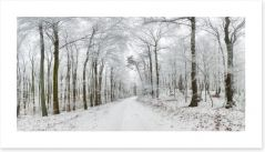 Forests Art Print 136150323