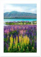 New Zealand Art Print 169066929