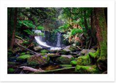 Waterfall through the ferns