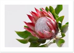 Flowers Art Print 218885029
