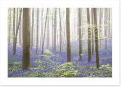 Forests Art Print 250680103