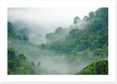 Mist in the rainforest