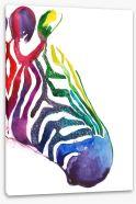 Rainbow stripe zebra