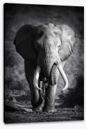 Elephant bull Stretched Canvas 46494334