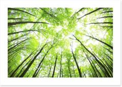 Green forest canopy Art Print 48198194