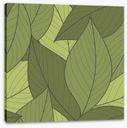 Moss leaves