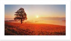 Lone tree in the sunrise meadow Art Print 52071979