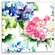 Hydrangea flowers Stretched Canvas 55717730