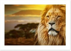 Mount Kilimanjaro lion Art Print 57644661