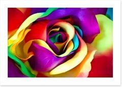 Spectacular rainbow rose