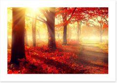 Autumn park sunlight