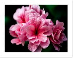 Flowers Art Print 83294756