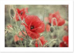 Vintage poppy Art Print 84934837