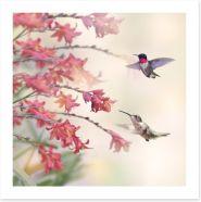 Hummingbirds and wildflowers Art Print 96388523
